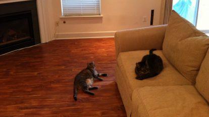 Cats On Wood Vinyl